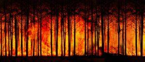 Auch Waldbrände können unter Brandstiftung fallen.
